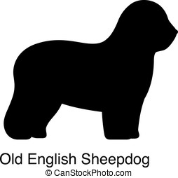 Old English Sheepdog dog silhouette, side view, vector