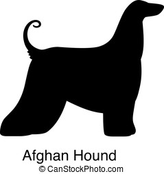 Afghan Hound dog silhouette, side view, vector