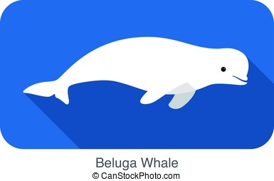 Beluga whale swimming in the water, vector illustration -...