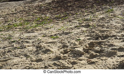 wet sand and grass - the texture of wet sand and grass