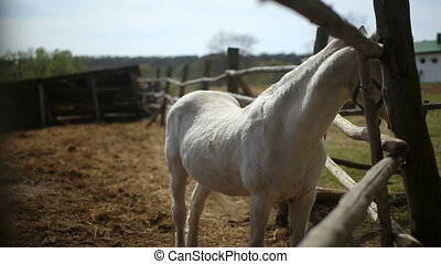 White Horse in the pen HD