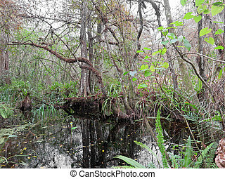 Natural Swamp Landscape Corkscrew Swamp Sanctuary Audubon...