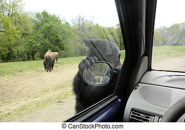 Teddy bear clinging to the rearview mirror - Brown Teddy...