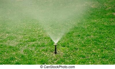 Yard grass sprinkler. Garden grass irrigation. Water...