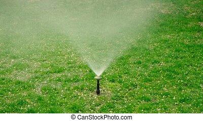Yard grass sprinkler. Garden grass irrigation. Water...