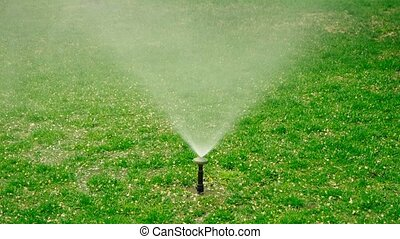 Yard grass sprinkler. Water springer on lawn with dog spots....