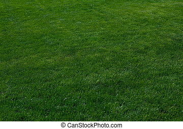 Texture of green grass for background