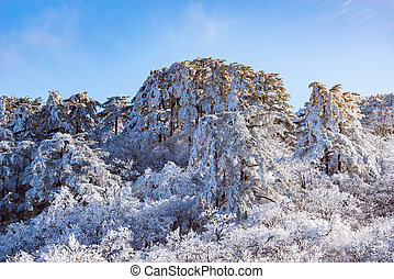 Huangshan National park. - Sunrise above the frozen forest...