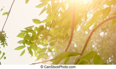 Green leaves in front of day sun in springtime. Leaves of park tree in sunny day with sun blinking. Organic or eco concept.