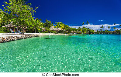 Beach with palm trees at a tropical resort on Moorea island