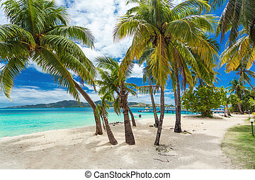 Tropical beach with coconut palm trees and lagoon on Fiji Islands