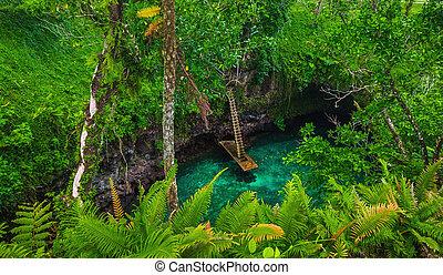 Samoa, sua, upolu, -, oceano, trincea, famoso, Buco, nuoto...