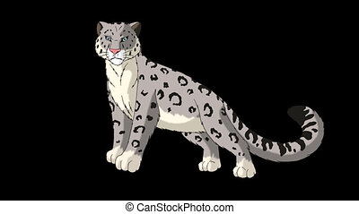 Snow Leopard Stands and Looks Around. Animated Motion...