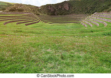 Grass green field in inca terraces