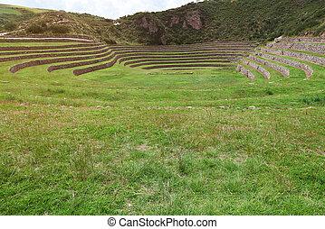 Grass green field in inca terraces