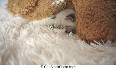 little kitten sleeps on a fluffy blanket close up