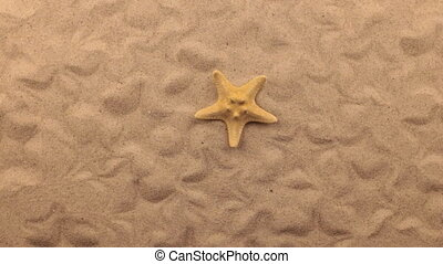 Rotation of a yellow starfish lying on the sand. View from...