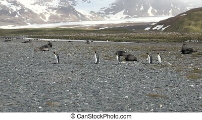 Penguins on background of snow mountains on Falkland Islands...