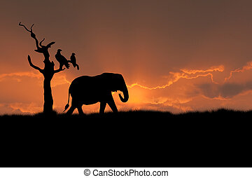 african elephant sunset - african scene with silhouette...