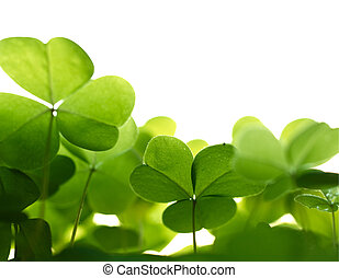 Clover plant macro shot, isolated on white background
