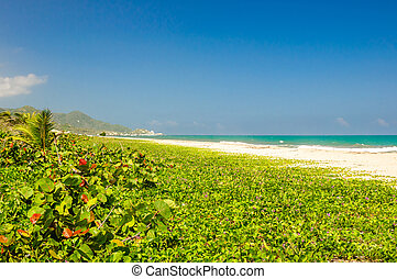 Natural beach of Arrecifes in national park Tayrona in Colombia
