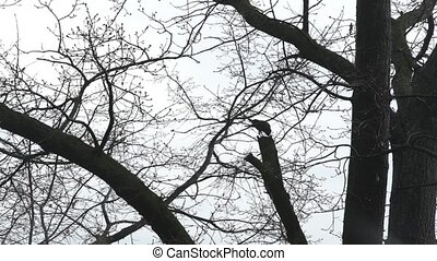 The crow on the tree eats HD