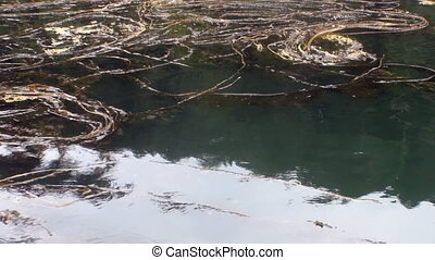 Sea mud and algae on calm water of Pacific Ocean in Alaska.