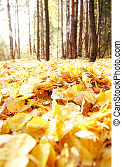 Leafage - Photo of autumnal leafage in the forest