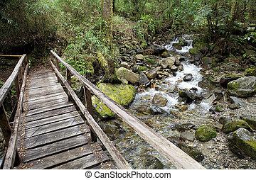 Vicente Perez Rosales National Park, Chile - Bridge over the...