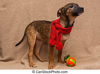 Portrait of apuppy in red scarf - Portrait of a sad puppy in...