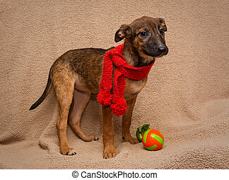 Portrait of a puppy in red scarf - Portrait of a sad puppy...