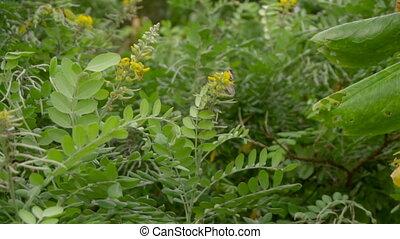 Monarch butterfly flight - Monarch butterfly -Danaus...