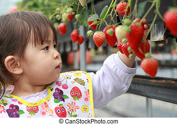 Japanese girl picking strawberry (2 years old)