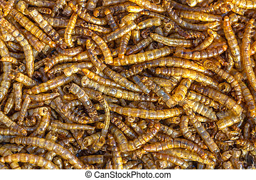 Dried mealworm background suitable as birdfood