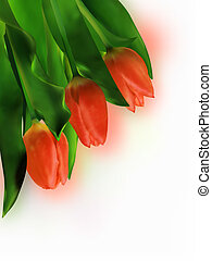 Three Red Tulip on White Background EPS 8 vector file...