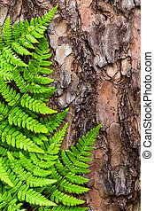 Green fern leaves background on bark tree, top view