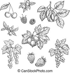 Vector sketch icons of fresh berries and fruits