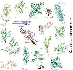Vector icons spice seasonings or herb flavorings