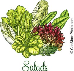 Salads and leafy vegetables vector poster - Salads poster of...