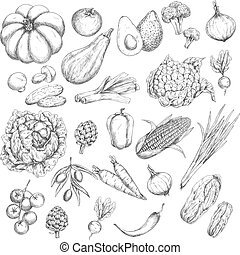 Vector sketch isolated vegetables or veggies icons -...