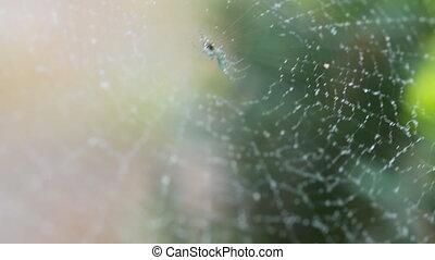 A Spiders Web Wet From The Morning Mist In A Close Up Shot,...