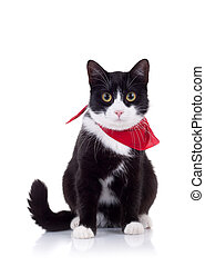 black and white cat with red scarf - seated black and white...