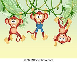 monkeys on lianas in the jungle