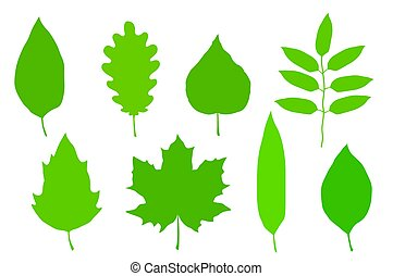 green leaves set - set of hand drawn green leaves...