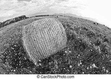 Haybale, Tuscany - Fisheye view of a Haybale in a Tuscan...