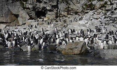 Gentoo Penguins on the beach in Antarctica