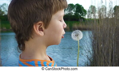Little boy blowing up the dandelion seeds, outdoors, slow...
