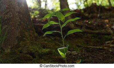 Summer green leaf ground