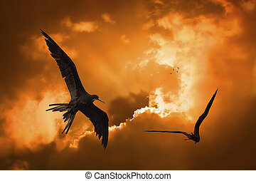 Birds flying in the sunset at Curacao