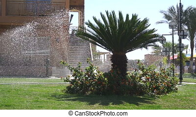 Green Palm tree with flowering bushes that water in slow motion